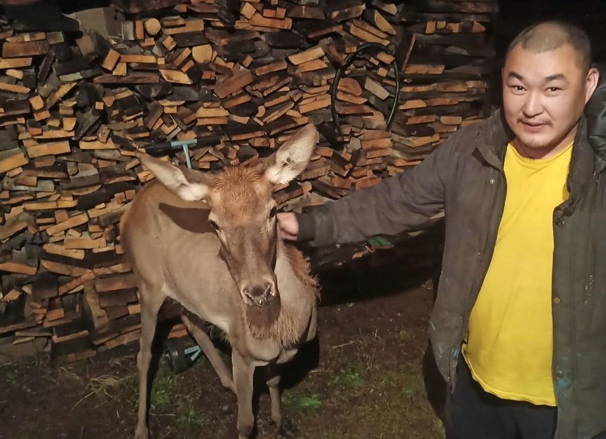 Лосенок нашел прибежище в Анинском дацане в Бурятии